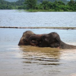 Elephant Conservation Center – Laos