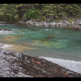 Preview ExpediTom Fly Fishing New Zealand