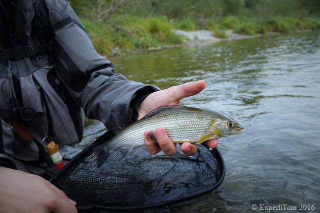 Fly Fishing for Grayling in Switzerland5