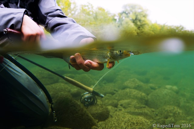 Fly Fishing for Grayling in Switzerland7
