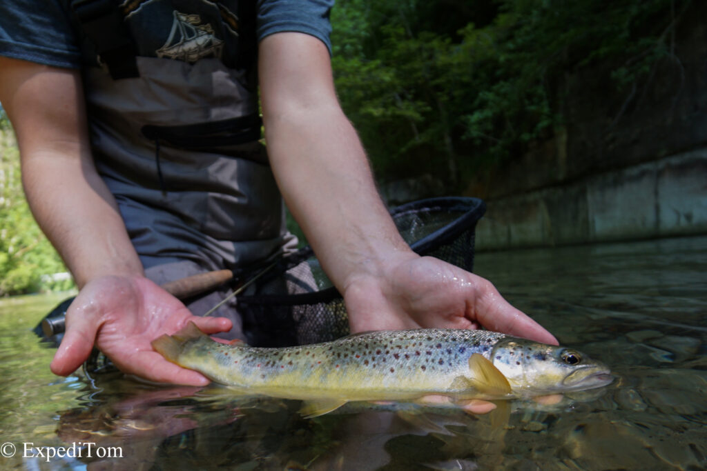 The first fish of this trip caught on a deeply dead drifted nymph. The brown trout gave a hell of a fight!