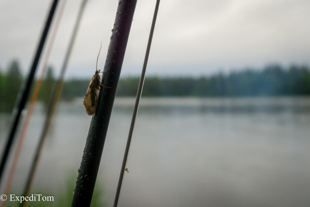 The small caddis that were hatching all over the Hårkan river while fly fishing Jämtland