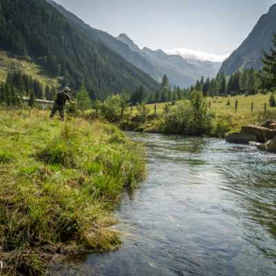 Small meadow creek in the Austrian Alps